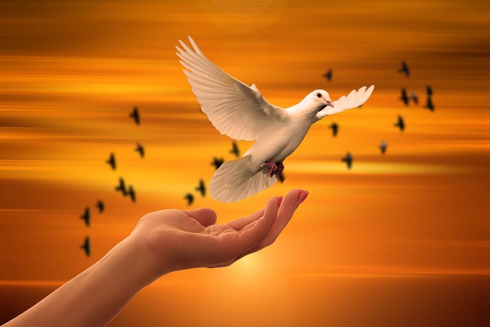 На фото изображена голубка, которая вылетает с ладошки.