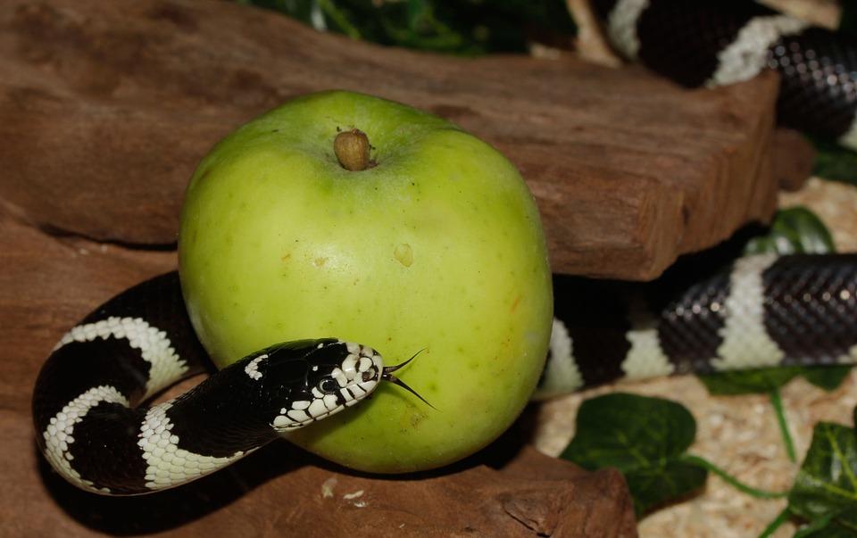 На фото изображена змея вокруг яблока, как символ, греха.