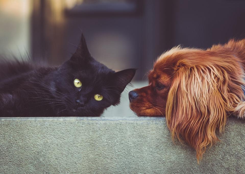 На фото изображен кот и собака. Они дружно лежат.
