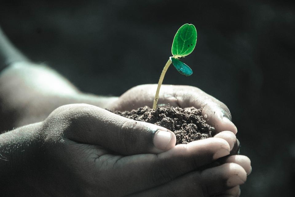 На фото изображены руки, держащие землю, из которой прорастает растение.