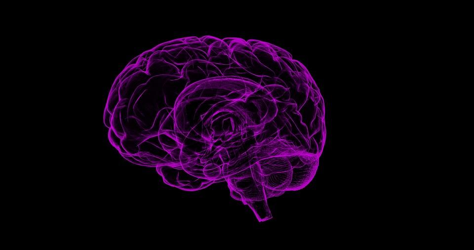 На фото изображен человеческий мозг в фиолетовом цвете.