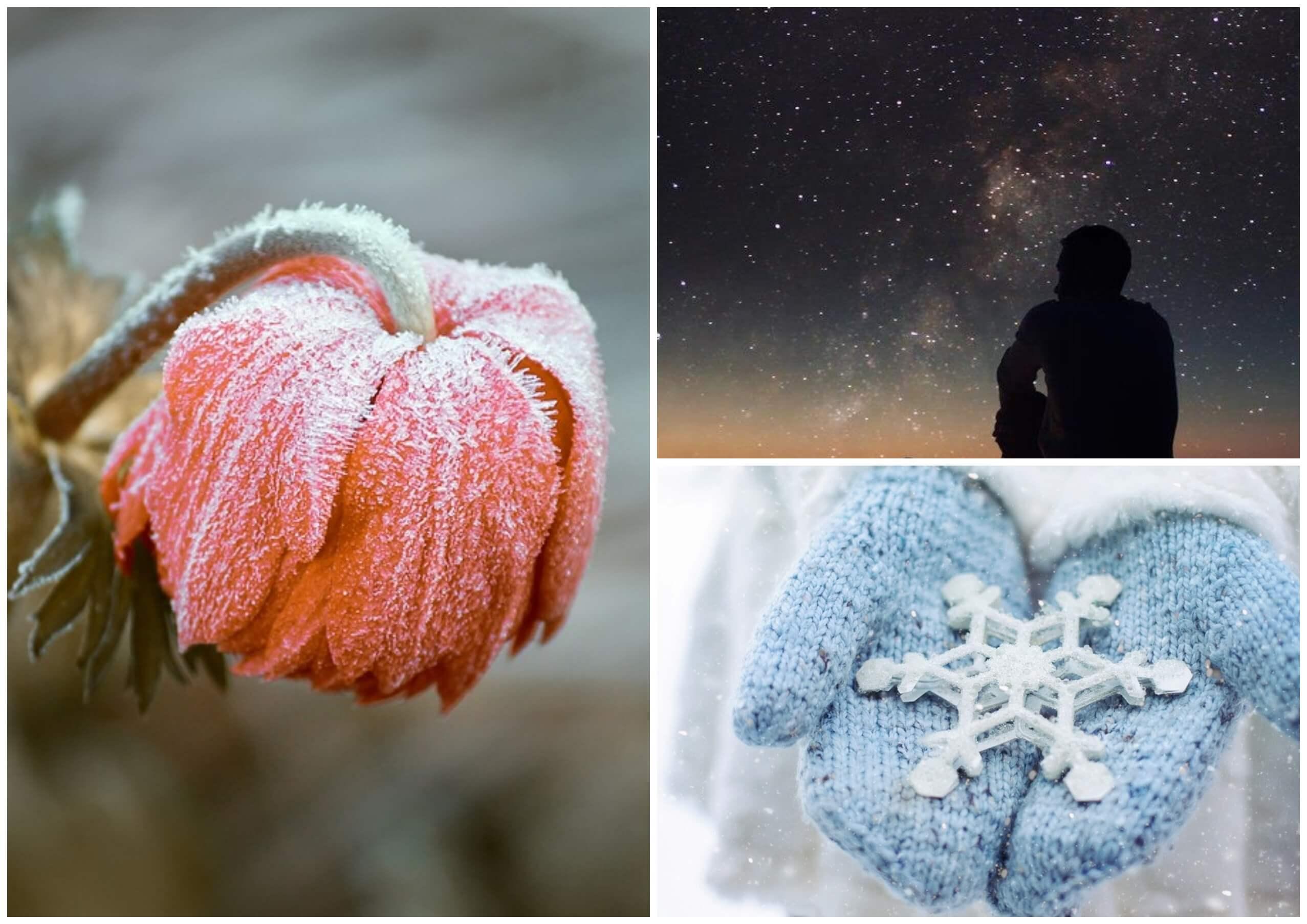 На фото изображены звездное небо, замерзший цветок и снежинка в руках.
