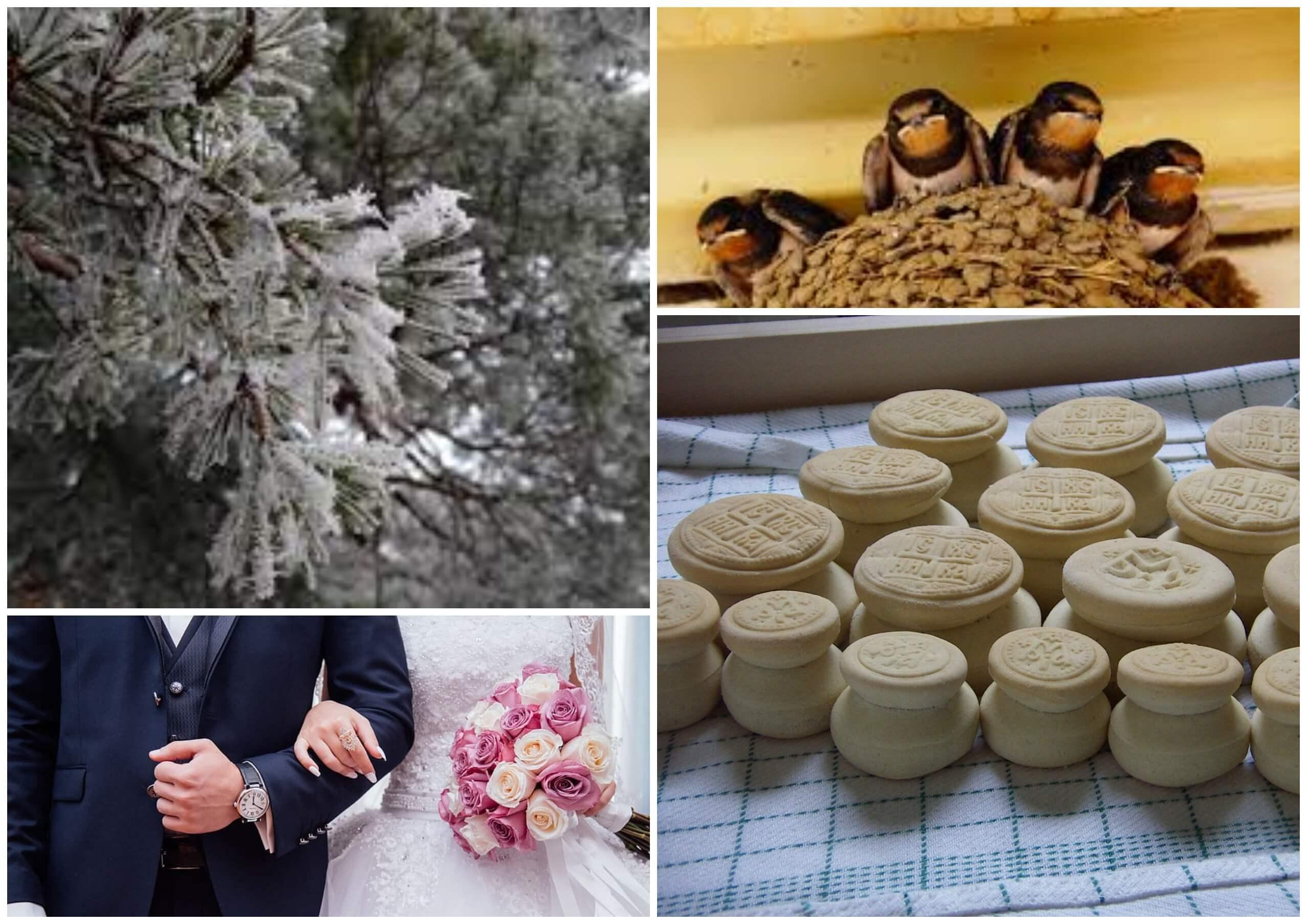 На фото изображены молодожены, ласточки в гнезде, просфоры и мороз на деревьях.