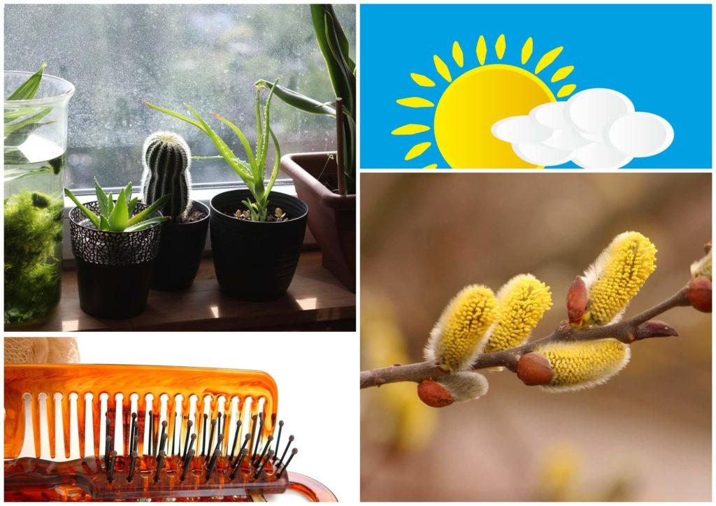 На фото изображены цветы на окне, ветвь вербы, расчески для волос и солнце.